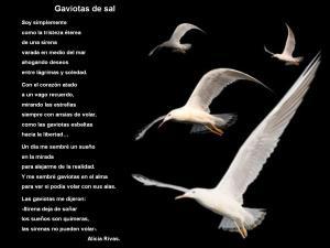alicia-rivas-gaviotas-de-sal