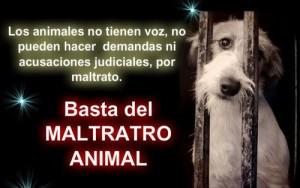 Maltrato-animal